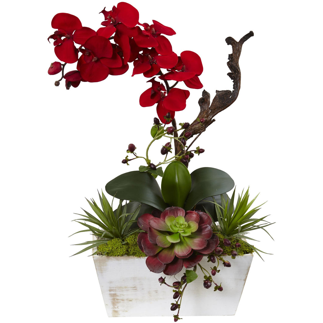 Seasonal Orchid & Succulent Garden w/White Wash Planter - Red