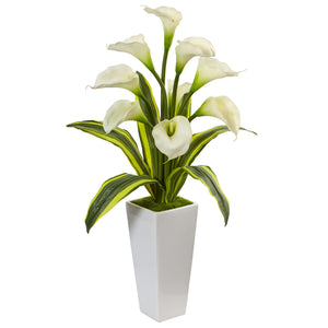 Callas with Tropical Leaves in Glossy Planter - White