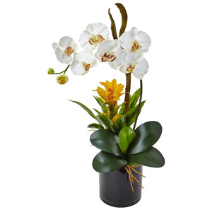 Orchid and Bromeliad in Glossy Black Cylinder - Cream