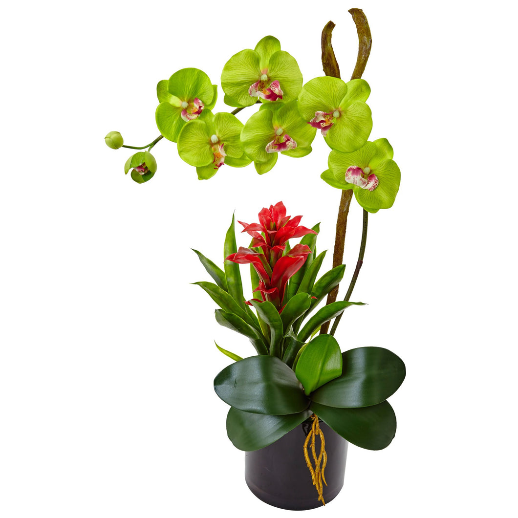Orchid and Bromeliad in Glossy Black Cylinder - Green