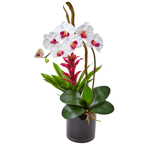 Orchid and Bromeliad in Glossy Black Cylinder - White