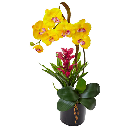 Orchid and Bromeliad in Glossy Black Cylinder - Yellow