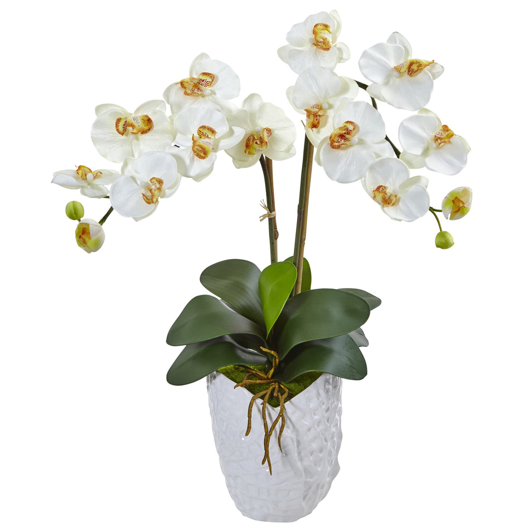 Double Phalaenopsis Orchid in White Vase