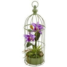 Load image into Gallery viewer, Cattleya Orchid Arrangement in Bird Cage