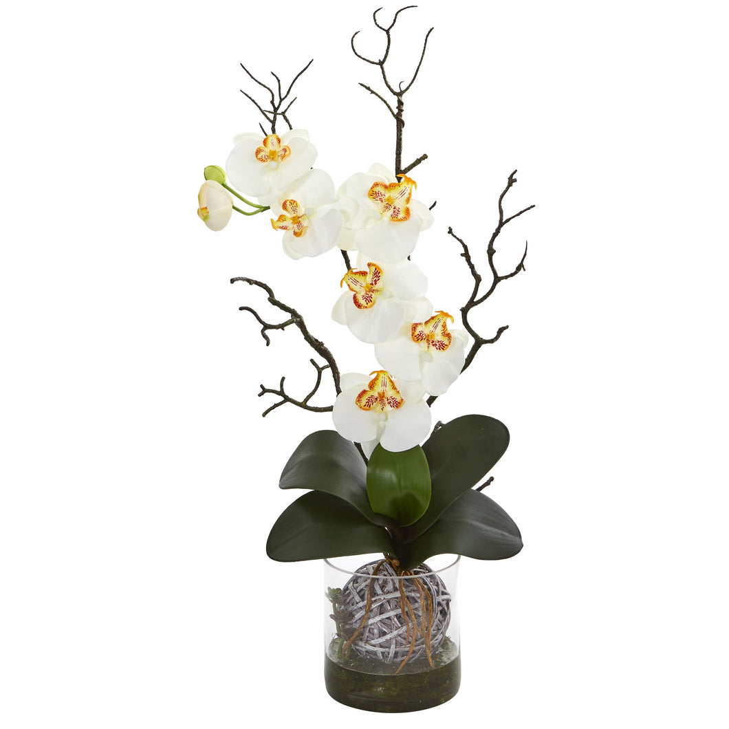 Phalaenopsis Orchid Artificial Arrangement in Vase - Cream