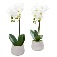 Load image into Gallery viewer, Phalaenopsis Orchid Artificial Arrangement (Set of 2)