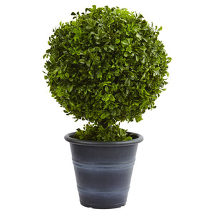 "23"" Boxwood Ball Topiary"