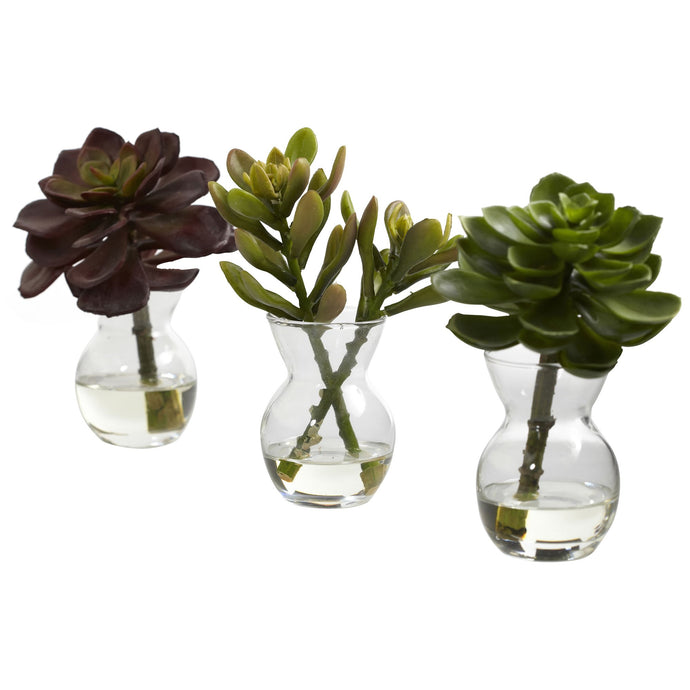 Succulent Arrangements (Set of 3)