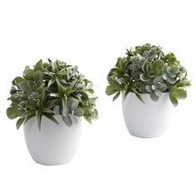 Load image into Gallery viewer, Mixed Succulent w/White Planter (Set of 2)
