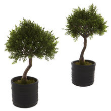 Load image into Gallery viewer, Cedar Bonsai w/Planter (Set of 2)