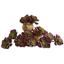 "Load image into Gallery viewer, 6"" Echeveria Succulent (Set of 12) - Burgundy"