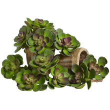 "Load image into Gallery viewer, 5"" Echeveria Succulent Plant (Set of 12) - Green/Burgundy"