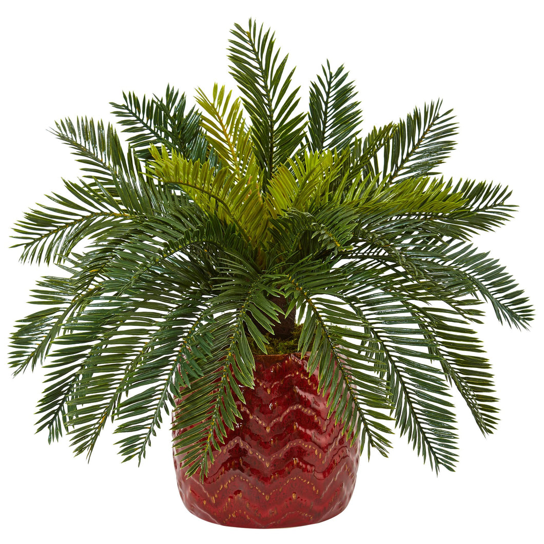 Cycas in Red Ceramic Planter