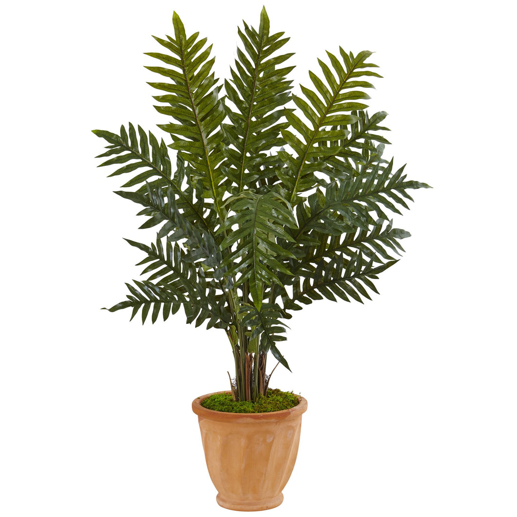 4' Evergreen Plant in Terracotta Planter