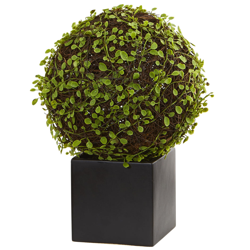 Mohlenbechia Ball Artificial Plant in Black Cube