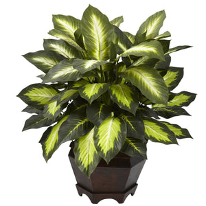 Triple Golden Dieffenbachia w/Wood Vase