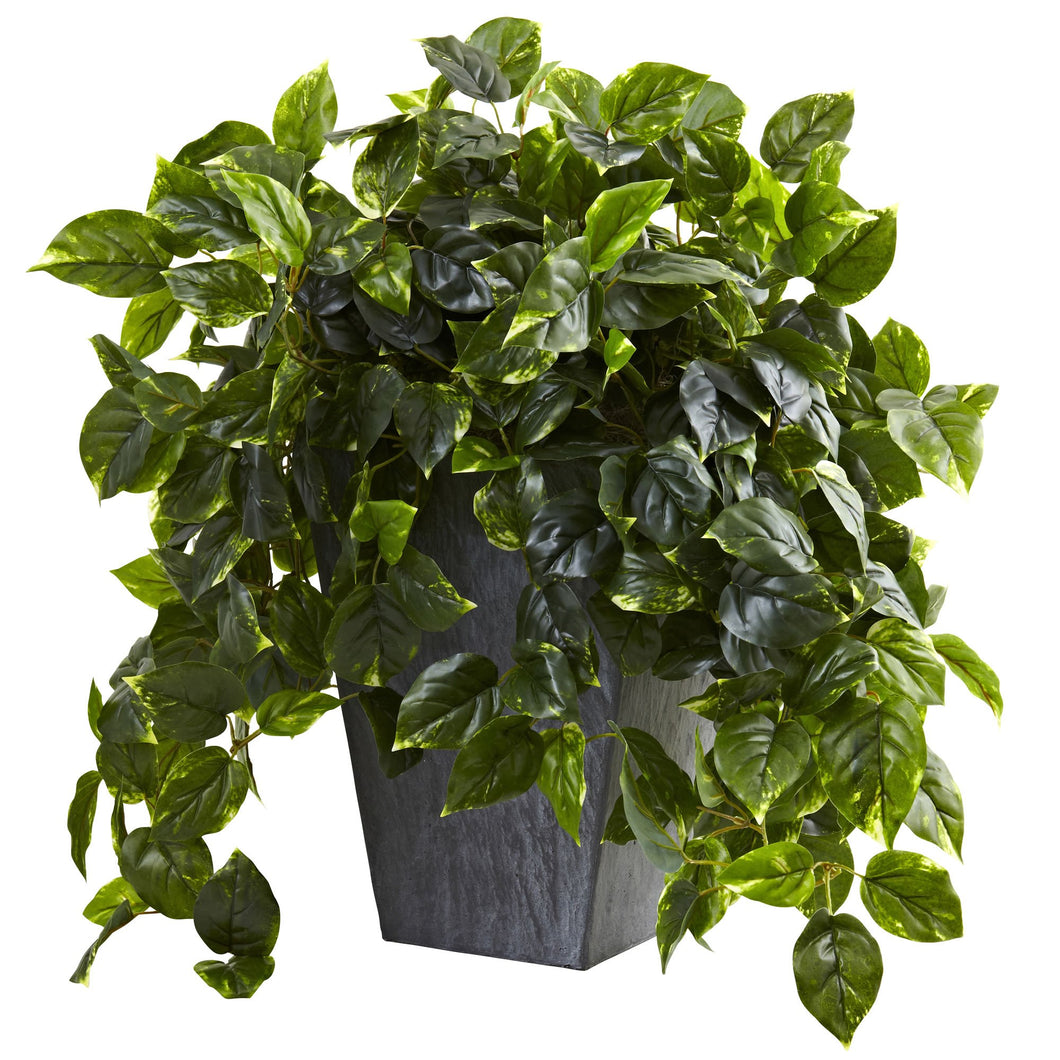 Hanging Pothos w/Slate Planter UV Resistant (Indoor/Outdoor)