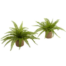Load image into Gallery viewer, Boston Fern w/Burlap Planter (Set of 2)