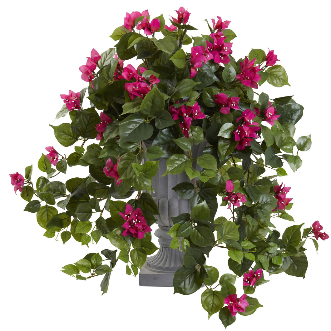 Bougainvillea with Decorative Urn - Beauty