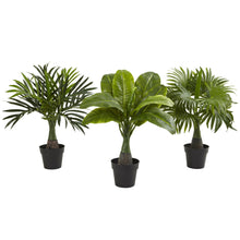 Load image into Gallery viewer, Areca, Fountain & Banana Palm (Set of 3)