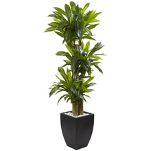 Load image into Gallery viewer, 5.5' Corn Stalk Dracaena with Black Wash Planter