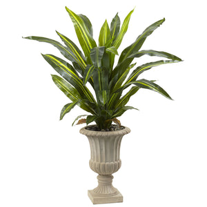 5' Dracaena Plant with Urn (Real Touch)