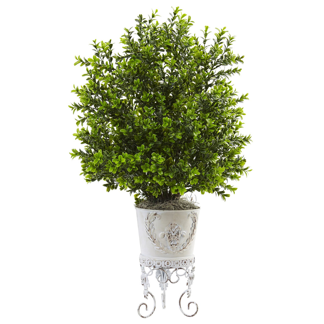 Boxwood with Metal Planter