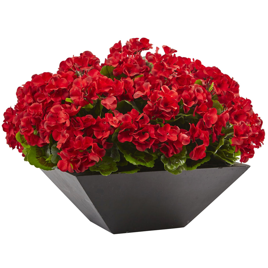 Geranium with Black Planter UV Resistant (Indoor/Outdoor) - Red