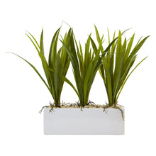 Load image into Gallery viewer, Grass in Rectangular Planter