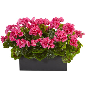 Geranium in Rectangular Planter UV Resistant (Indoor/Outdoor) - Beauty