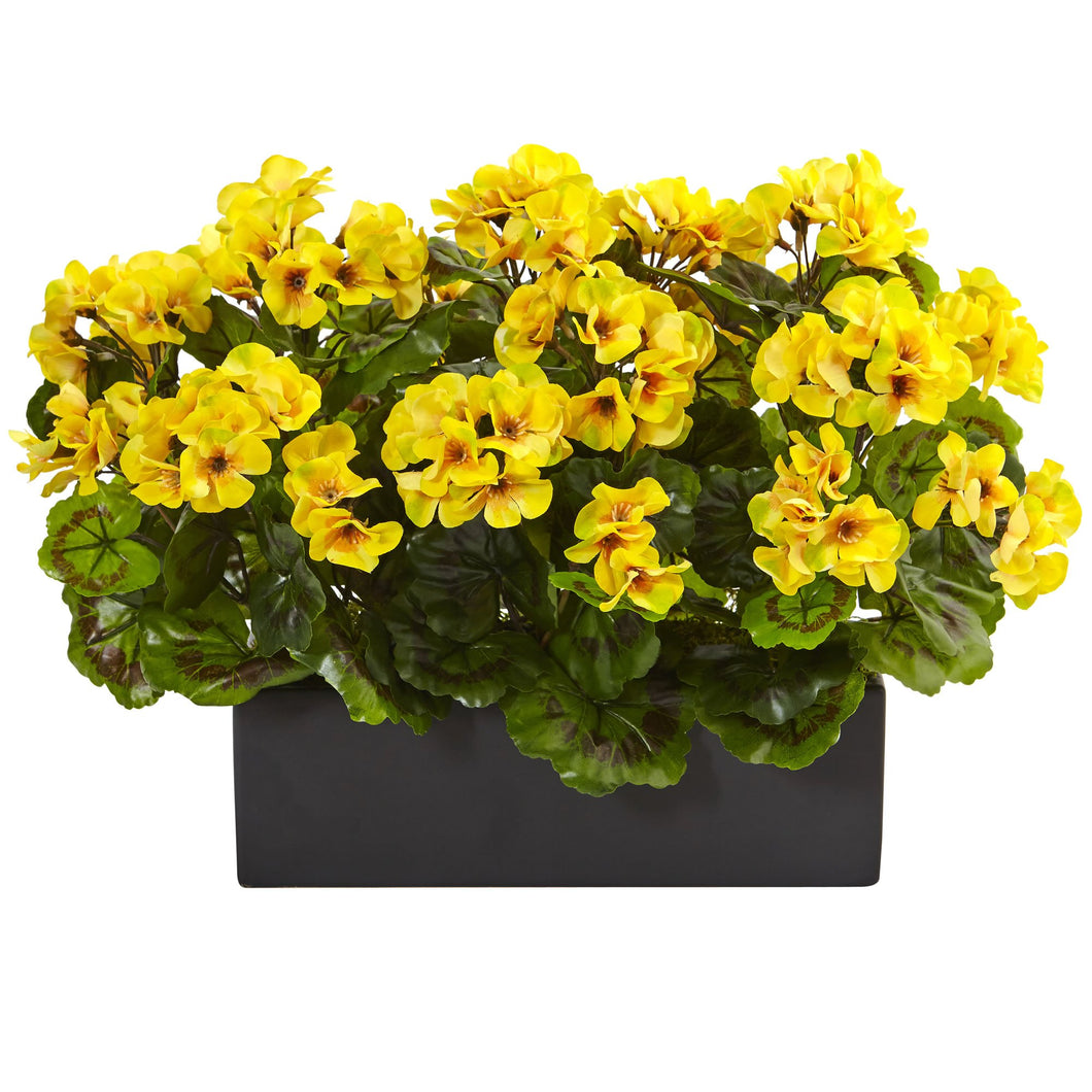 Geranium in Rectangular Planter UV Resistant (Indoor/Outdoor) - Yellow