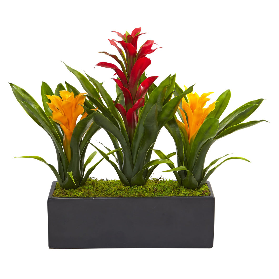 Bromeliads in Rectangular Planter - Red Yellow