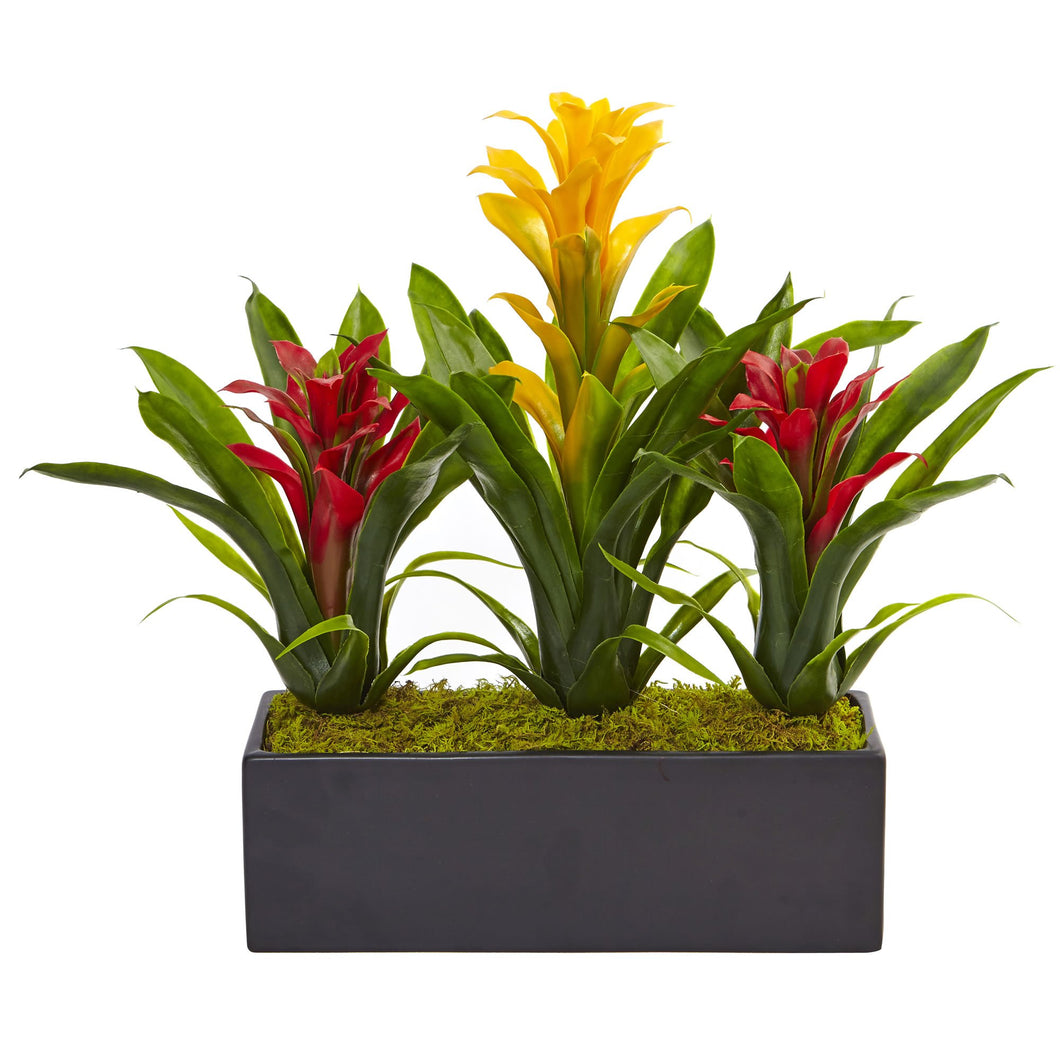Bromeliads in Rectangular Planter - Yellow Red