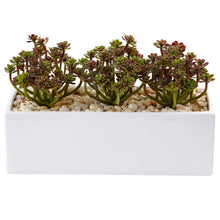 Load image into Gallery viewer, Sedum in Rectangular Planter