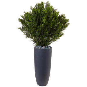 4' Cedar in Cylinder Planter (Indoor/Outdoor)