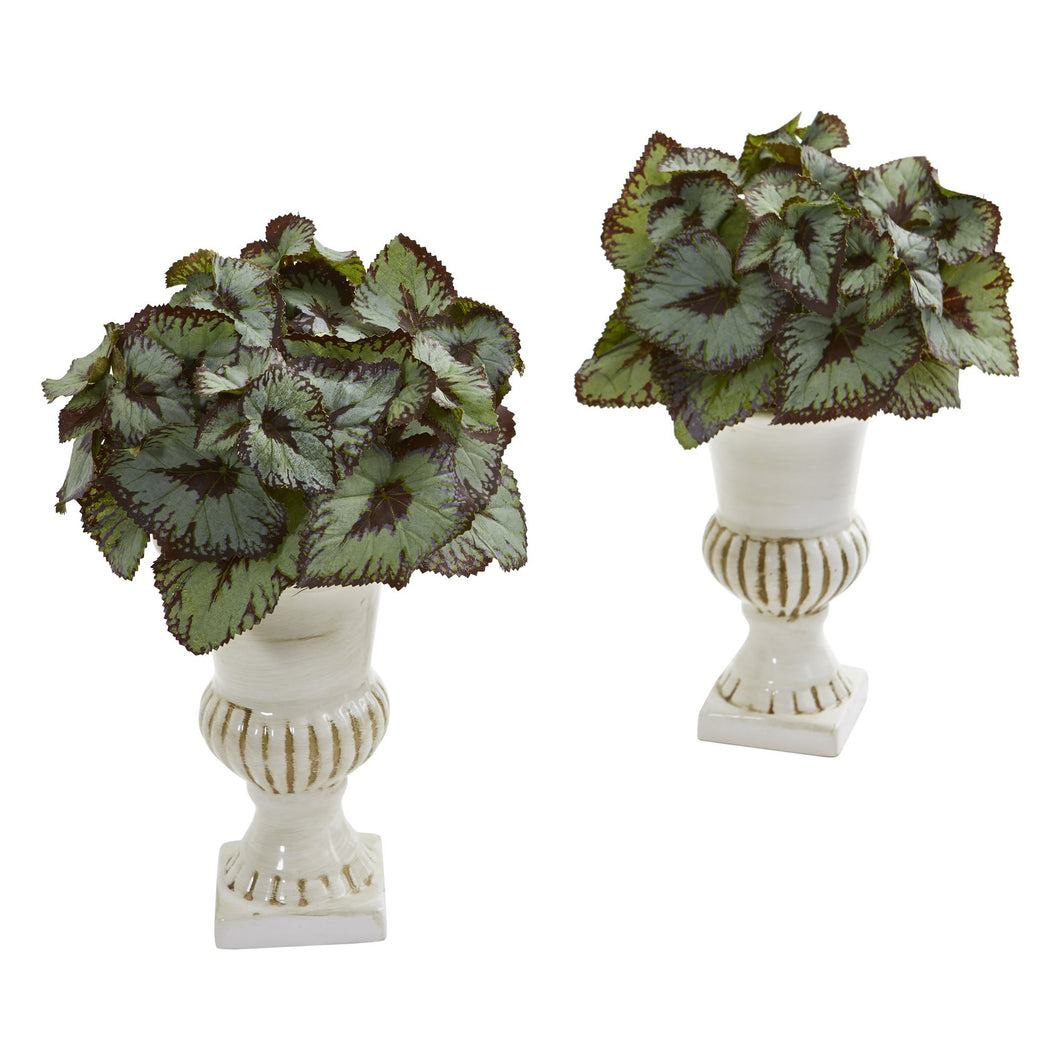 Rex Begonia Artificial Plant in White Urn (Set of 2)
