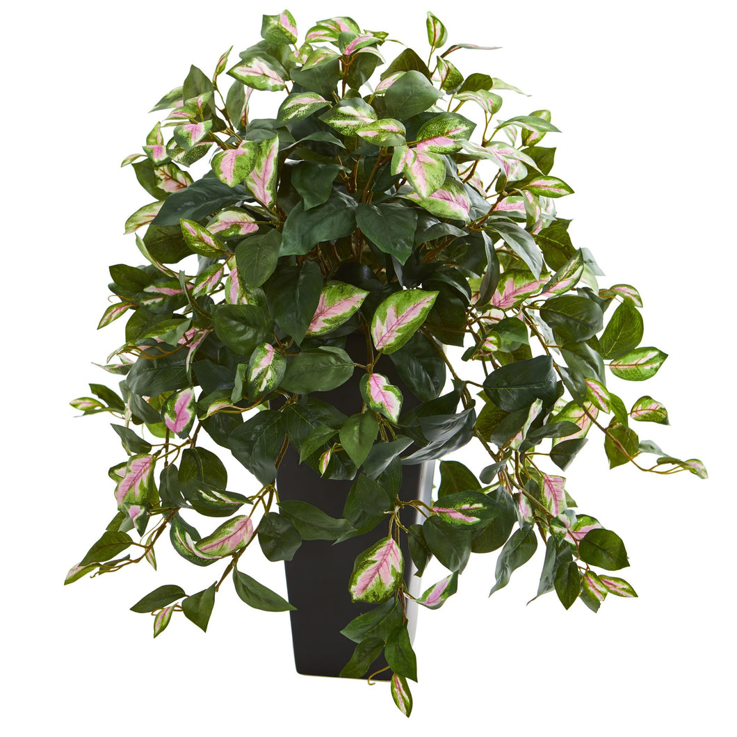 Hoya Artificial Plant in Black Vase