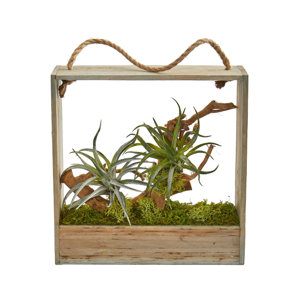 Air Plant Artificial Succulent in Decorative Hanging Frame