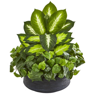 Golden Dieffenbachia & Pothos Artificial Plant in Black Planter