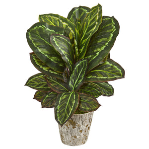 "26"" Maranta Artificial Plant in Weathered Oak Planter"