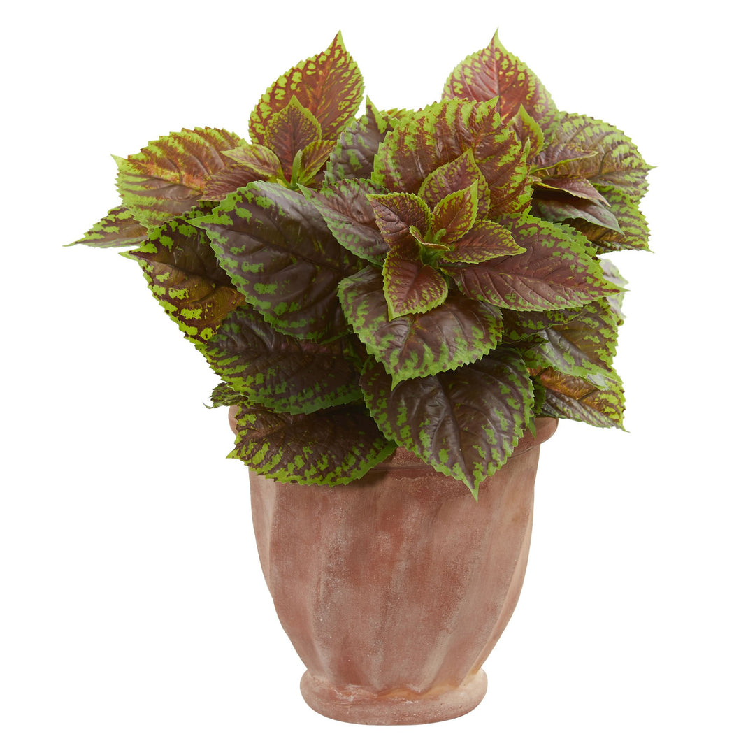 Coleus Artificial Plant in Terra Cotta Planter (Real Touch)