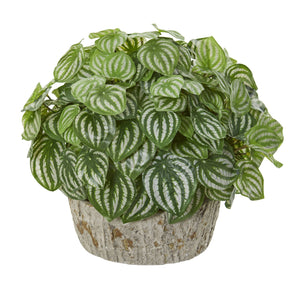 Peperomia Artificial Plant in Weathered Vase (Real Touch)