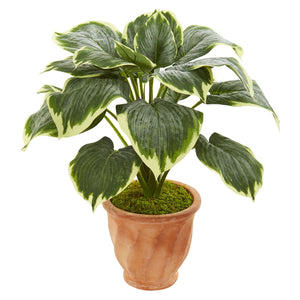 "22"" Variegated Hosta Artificial Plant in Terracotta Planter"