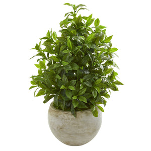 "30"" Coffee Leaf Artificial Plant in Sandstone Bowl (Real Touch)"