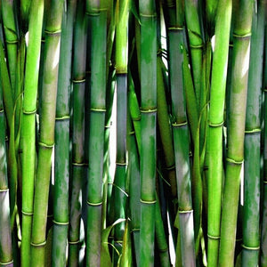 What are the benefits of bamboo?