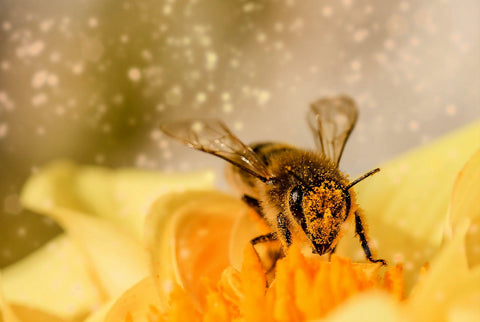 Bee pollinating on a yellow flower