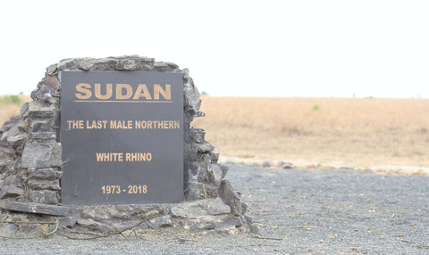 a lone gravestone for the last northern, male, white rhino, from 1973 - 2018