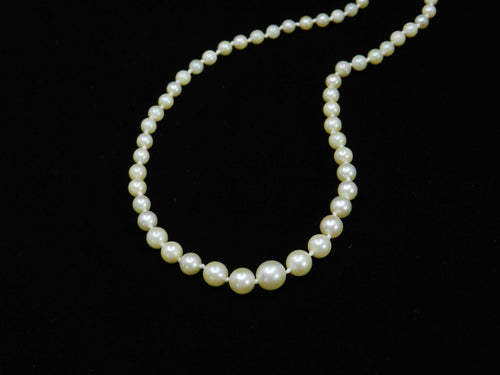 Cultured Pearl Necklace Graduating to a Silver Clasp