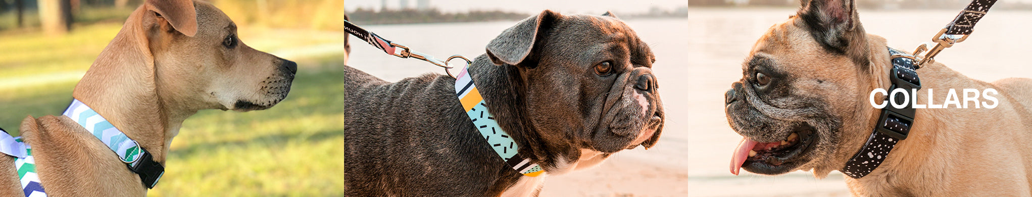 A Twiggy Dog Collar (featuring a matching harness) from the