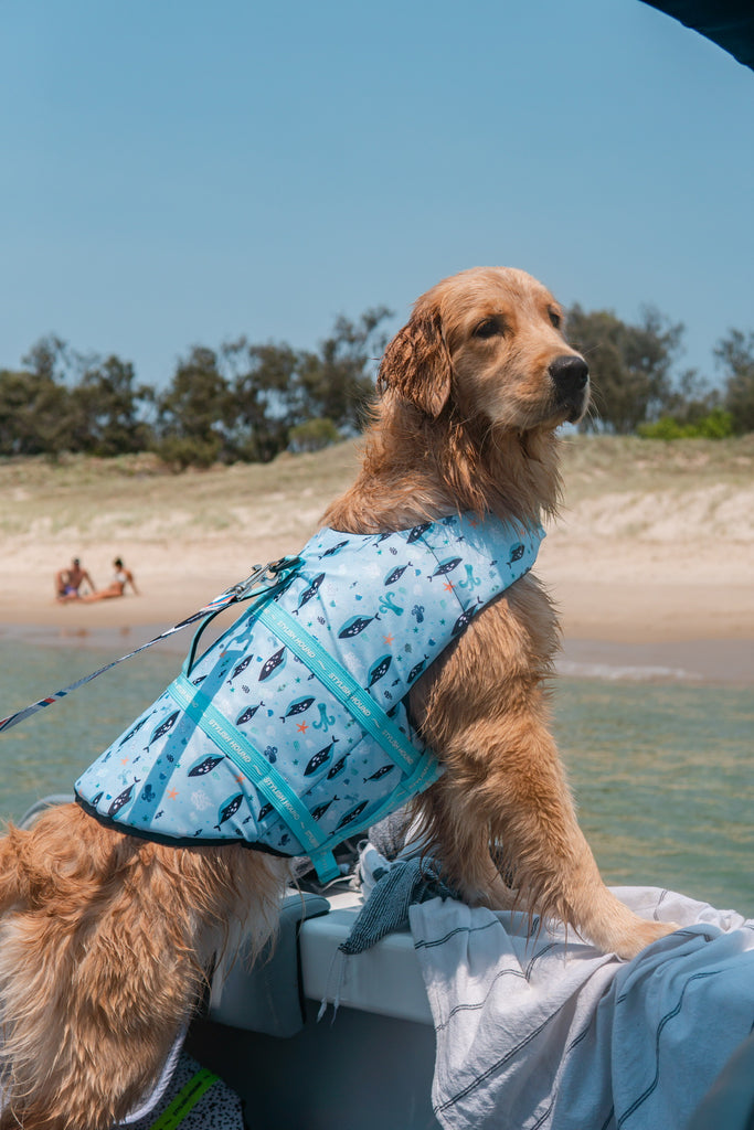 Deep Dive Dog Swim Jacket - stylish-hound.com